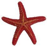 Морская звезда для аквариума Prime Морская звезда 8х7.5х1.5 см