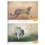 Альбом для рисования ArtSpace Животные Wild Animal 29.7 х 21 см (A4), 100 г/м?, 40 л.