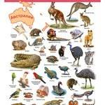 Электронный плакат Дрофа-Медиа Животные Австралии и Океании
