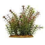 Искусственное растение ArtUniq Ротала индийская 15 см